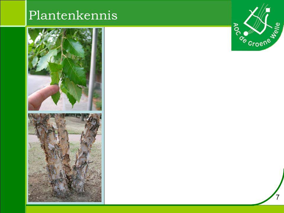 Plantenkennis 7