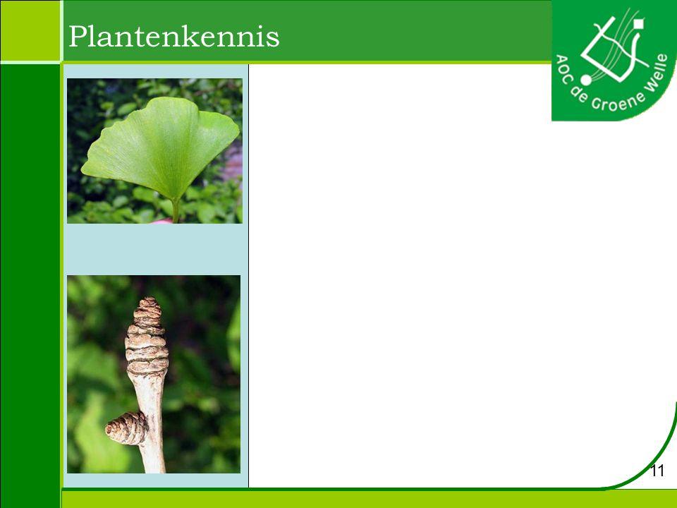 Plantenkennis 11