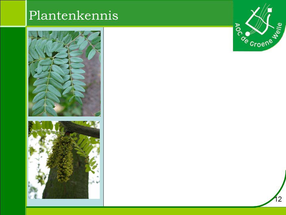 Plantenkennis 12