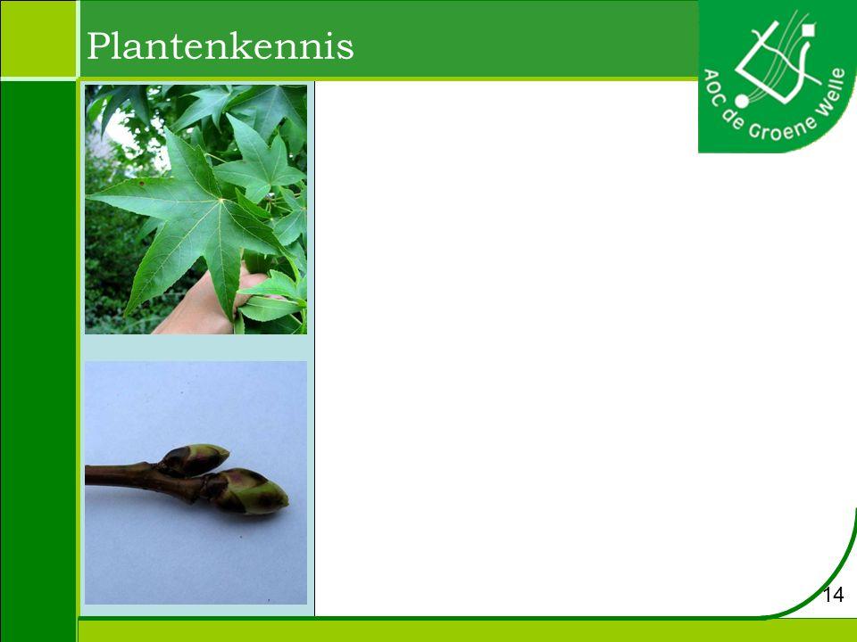 Plantenkennis 14