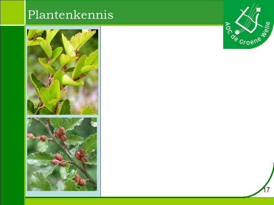 Plantenkennis 17
