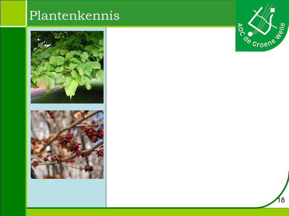 Plantenkennis 18