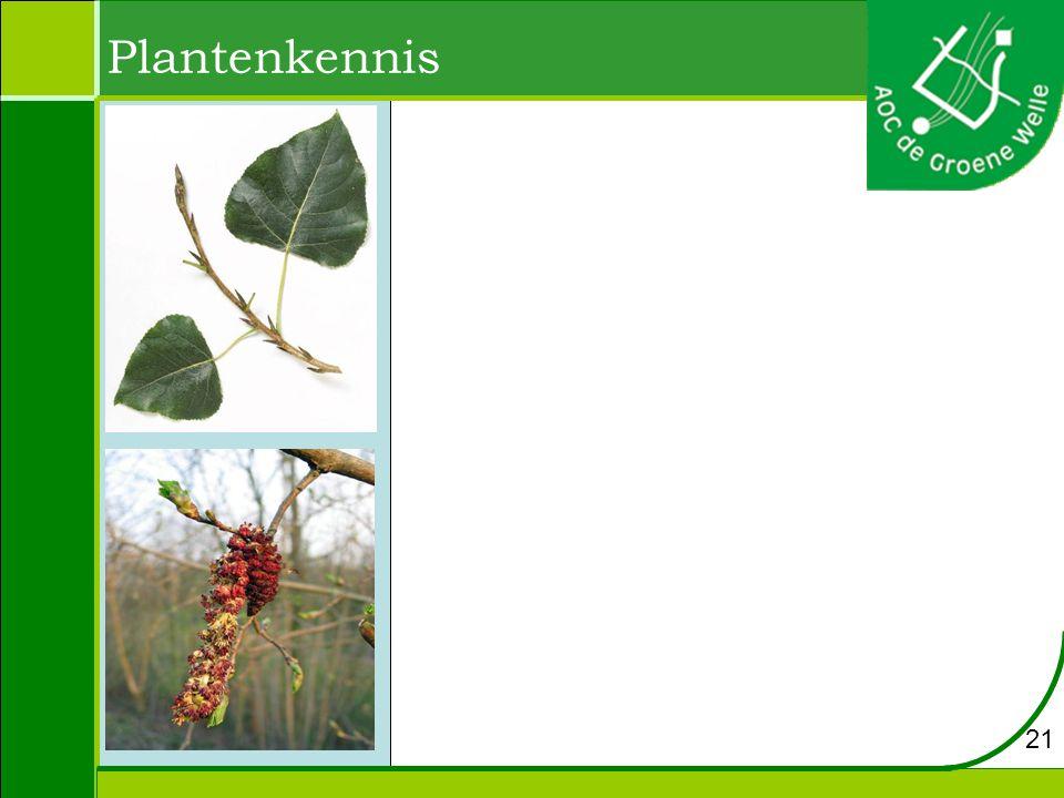 Plantenkennis 21