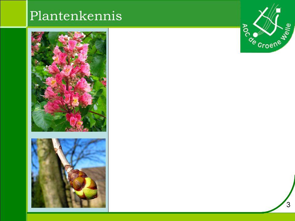 Plantenkennis 3