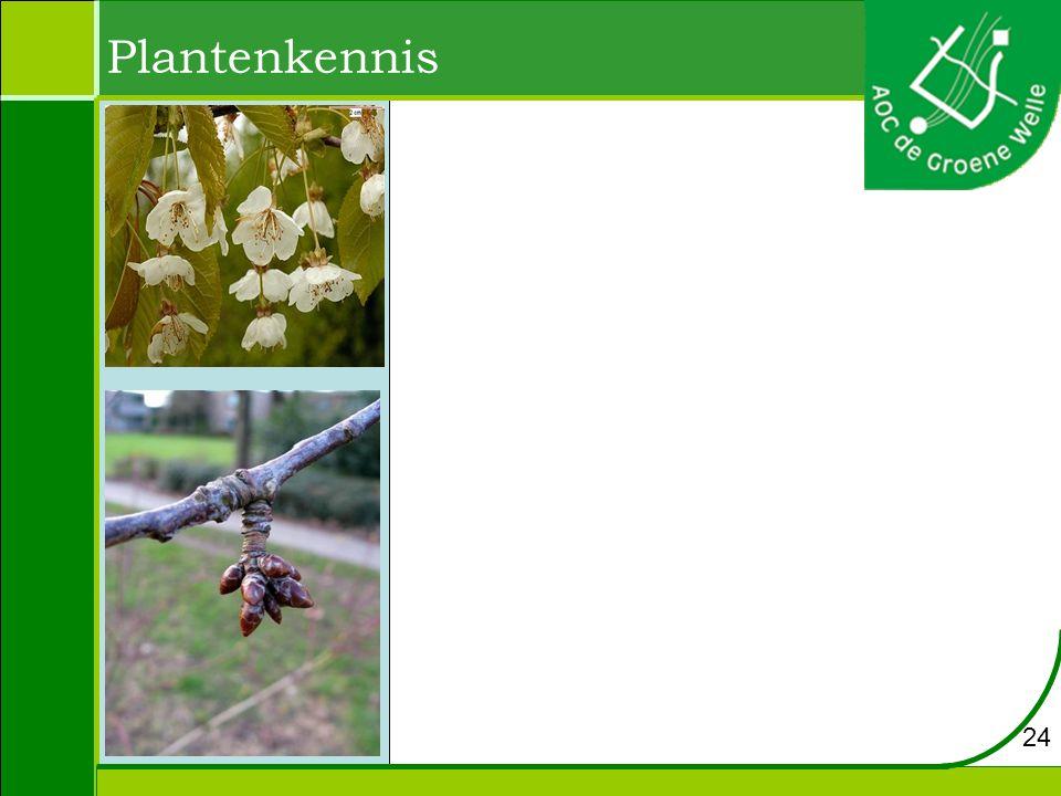 Plantenkennis 24