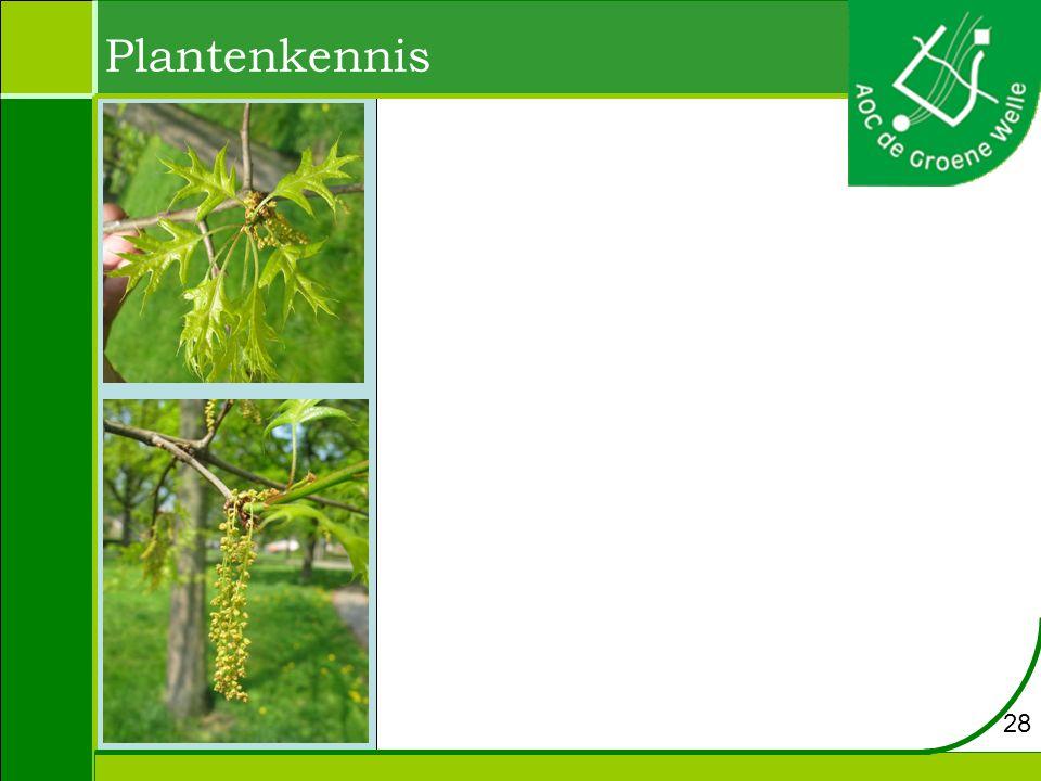 Plantenkennis 28