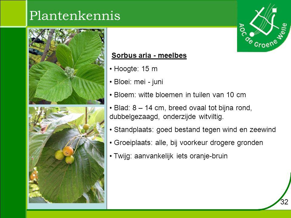 Plantenkennis Sorbus aria - meelbes Hoogte: 15 m Bloei: mei - juni