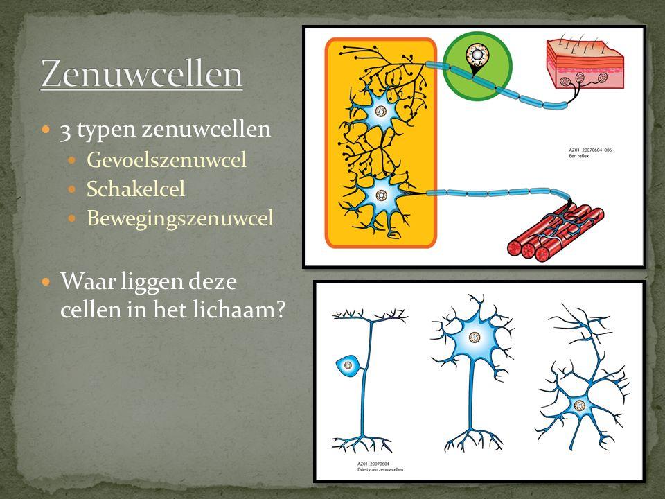 Zenuwcellen 3 typen zenuwcellen