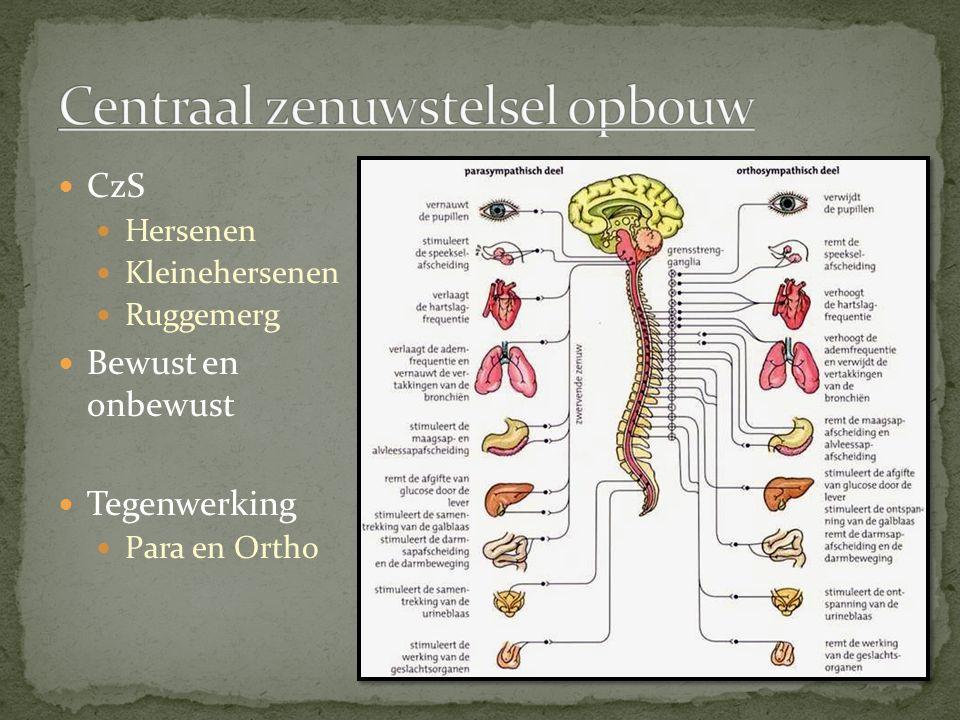 Centraal zenuwstelsel opbouw