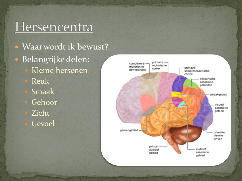 Hersencentra Waar wordt ik bewust Belangrijke delen: Kleine hersenen