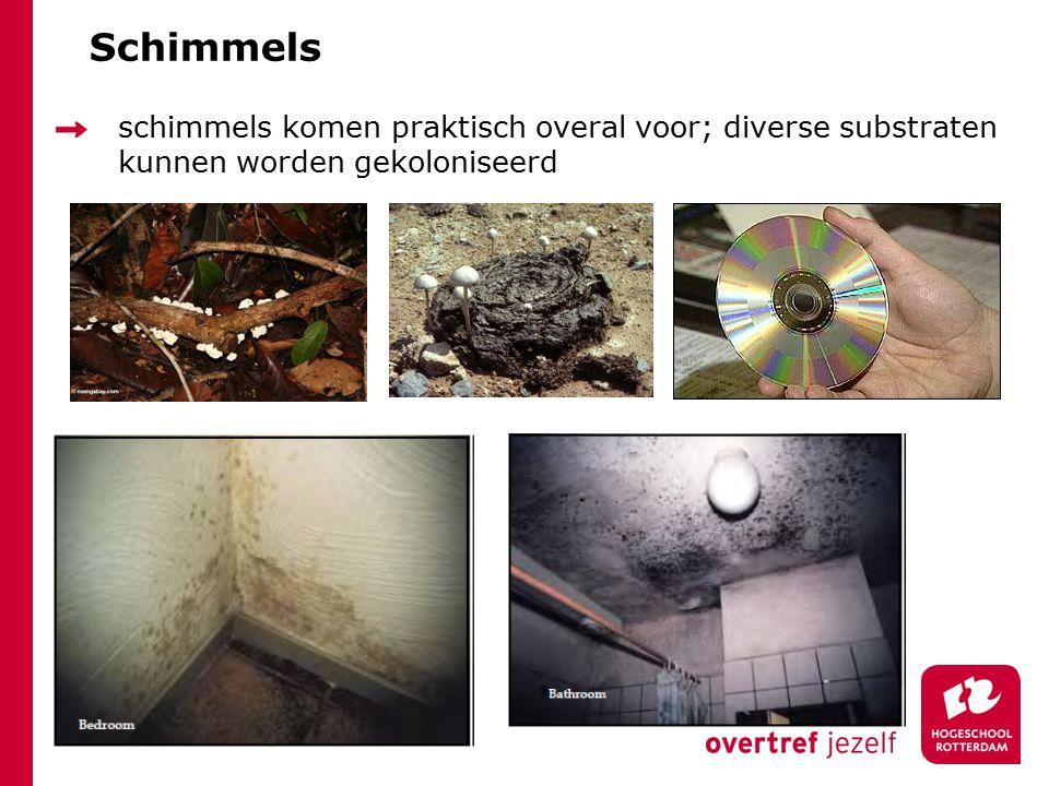 Schimmels schimmels komen praktisch overal voor; diverse substraten kunnen worden gekoloniseerd.