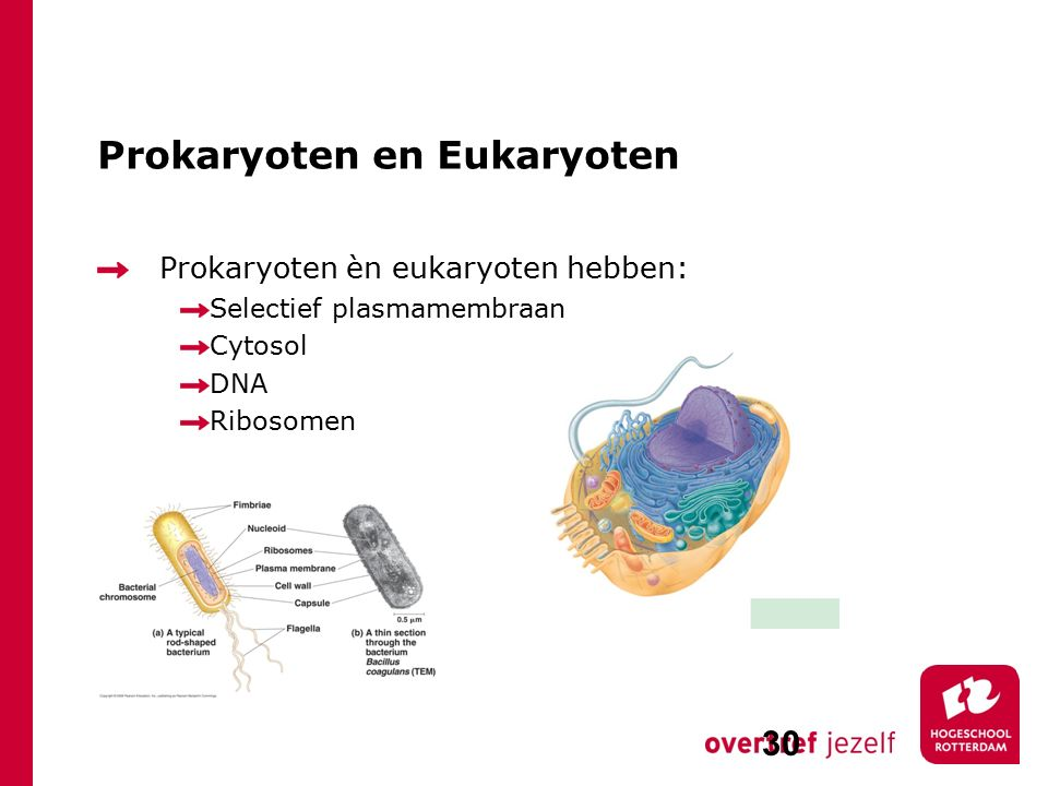 Prokaryoten en Eukaryoten