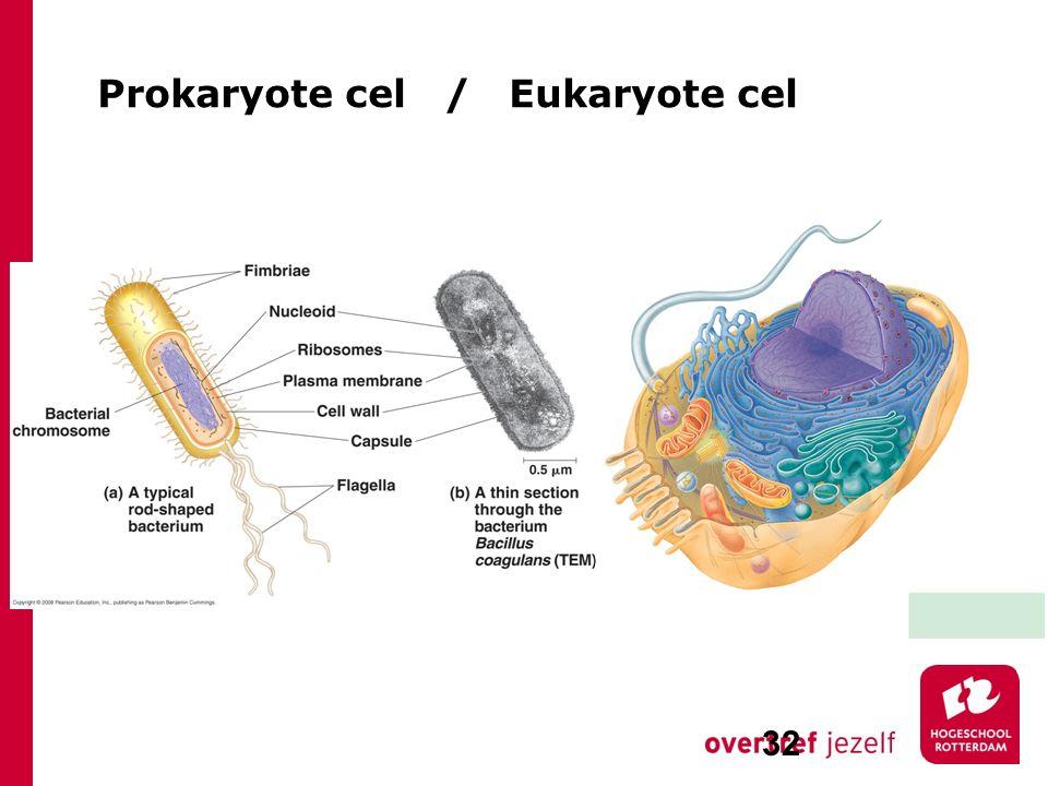 Prokaryote cel / Eukaryote cel