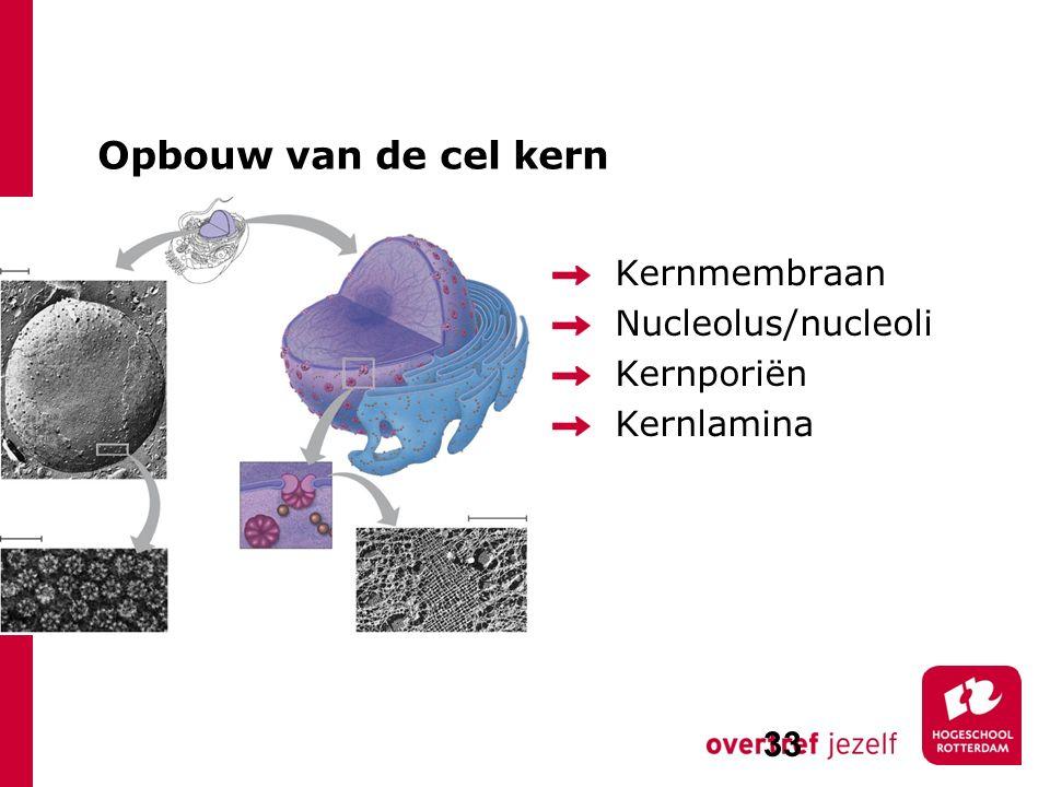 Opbouw van de cel kern Kernmembraan Nucleolus/nucleoli Kernporiën