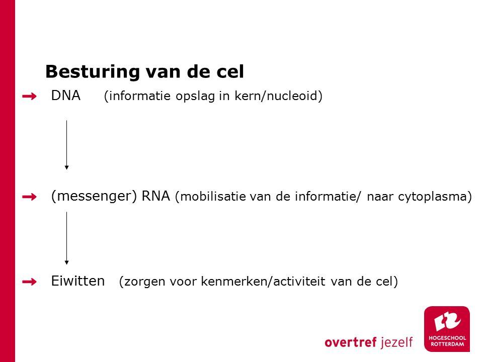 Besturing van de cel DNA (informatie opslag in kern/nucleoid)