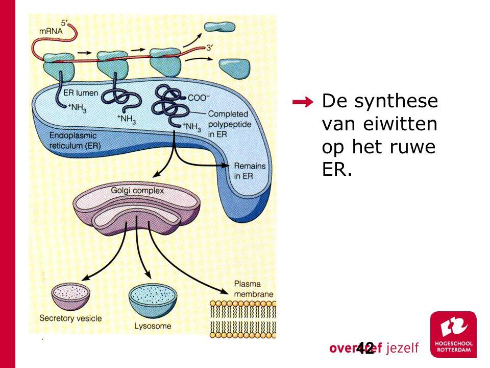 De synthese van eiwitten op het ruwe ER.