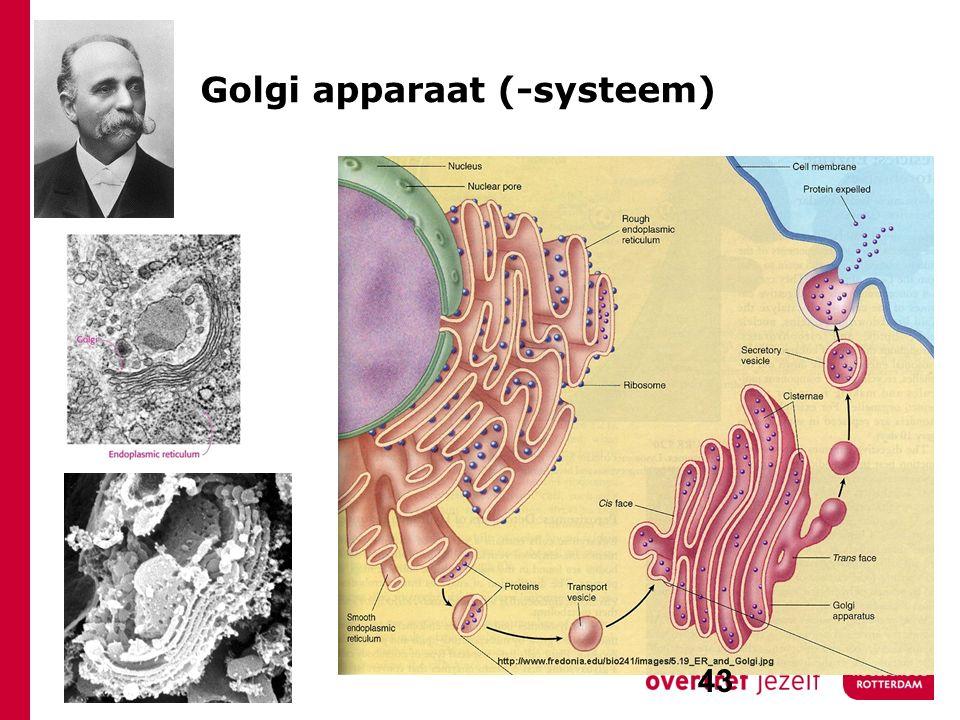 Golgi apparaat (-systeem)