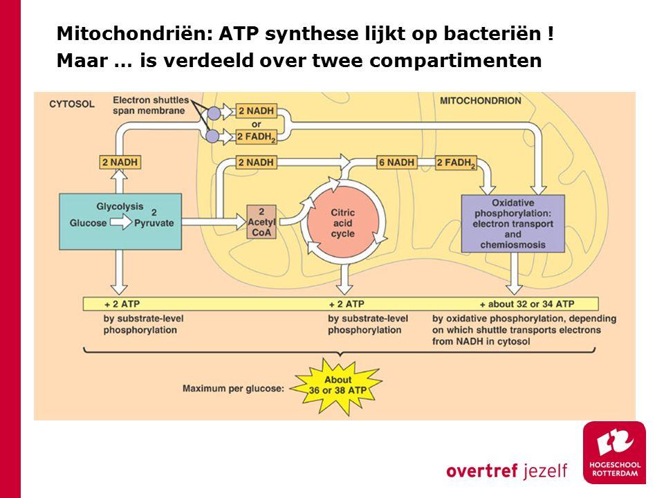 Mitochondriën: ATP synthese lijkt op bacteriën !
