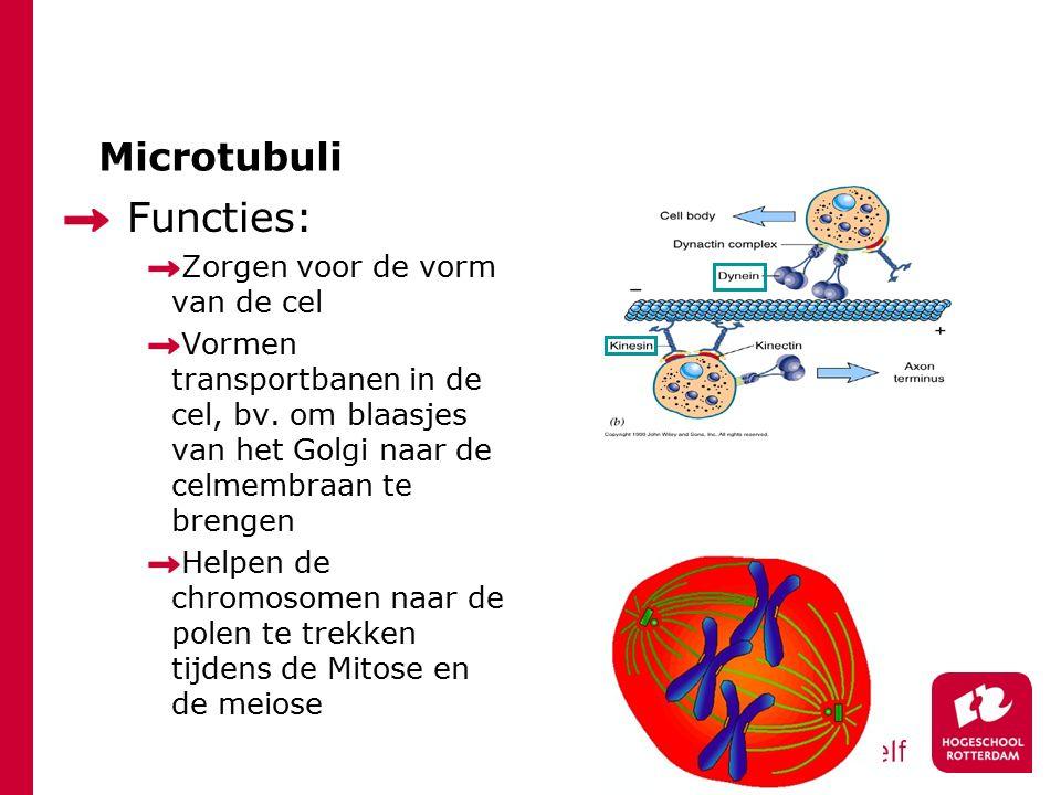 Functies: Microtubuli Zorgen voor de vorm van de cel