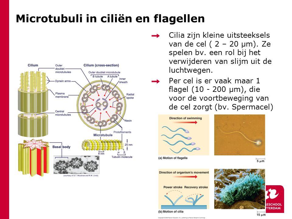 Microtubuli in ciliën en flagellen