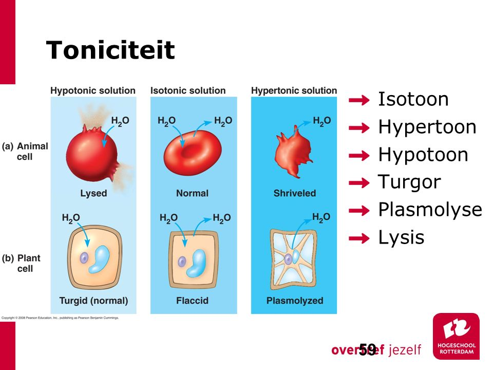 Toniciteit Isotoon Hypertoon Hypotoon Turgor Plasmolyse Lysis