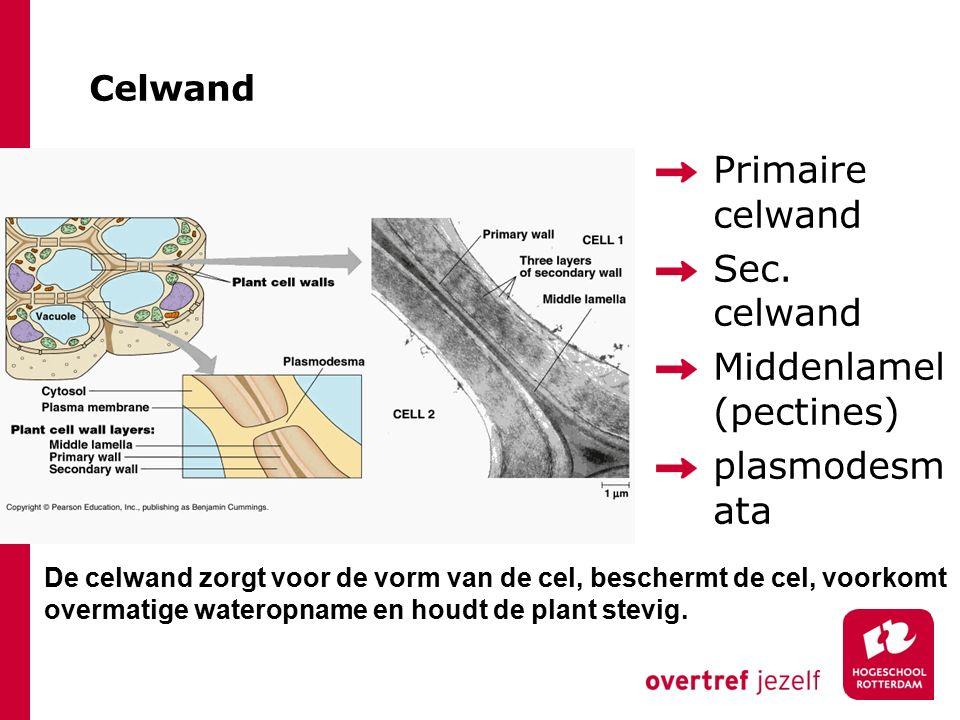 Middenlamel (pectines) plasmodesmata
