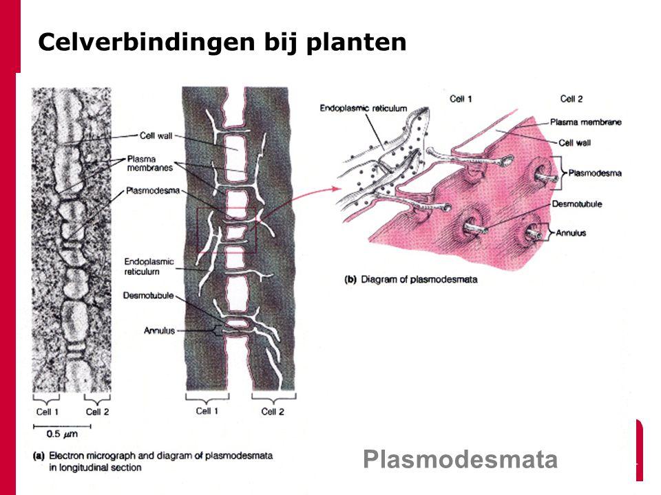Celverbindingen bij planten