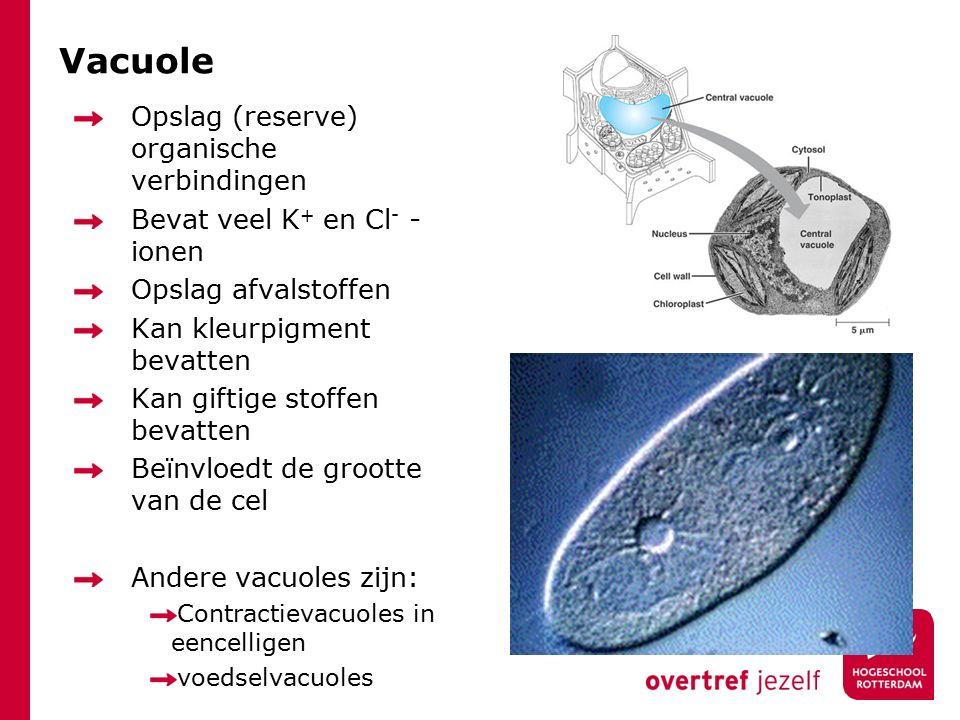 Vacuole Opslag (reserve) organische verbindingen