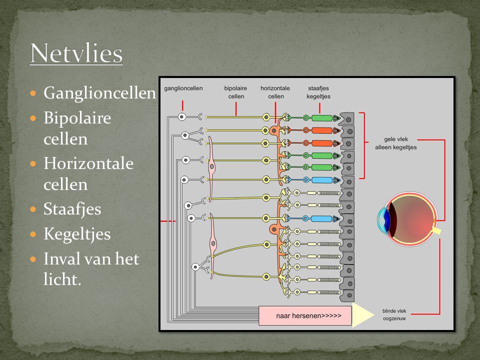 Netvlies Ganglioncellen Bipolaire cellen Horizontale cellen Staafjes