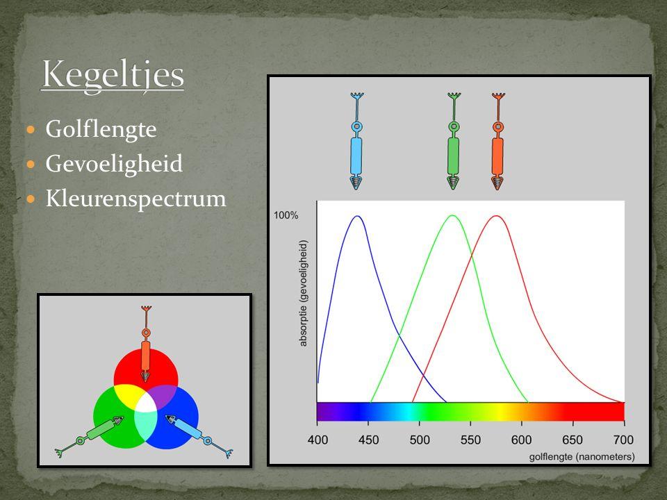 Kegeltjes Golflengte Gevoeligheid Kleurenspectrum