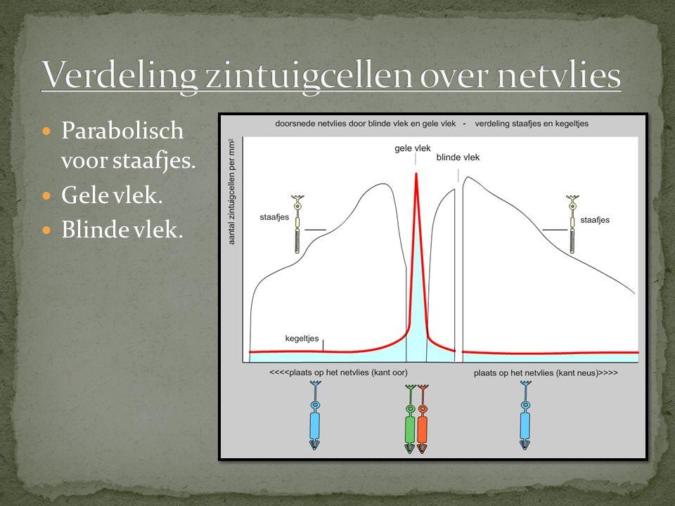 Verdeling zintuigcellen over netvlies