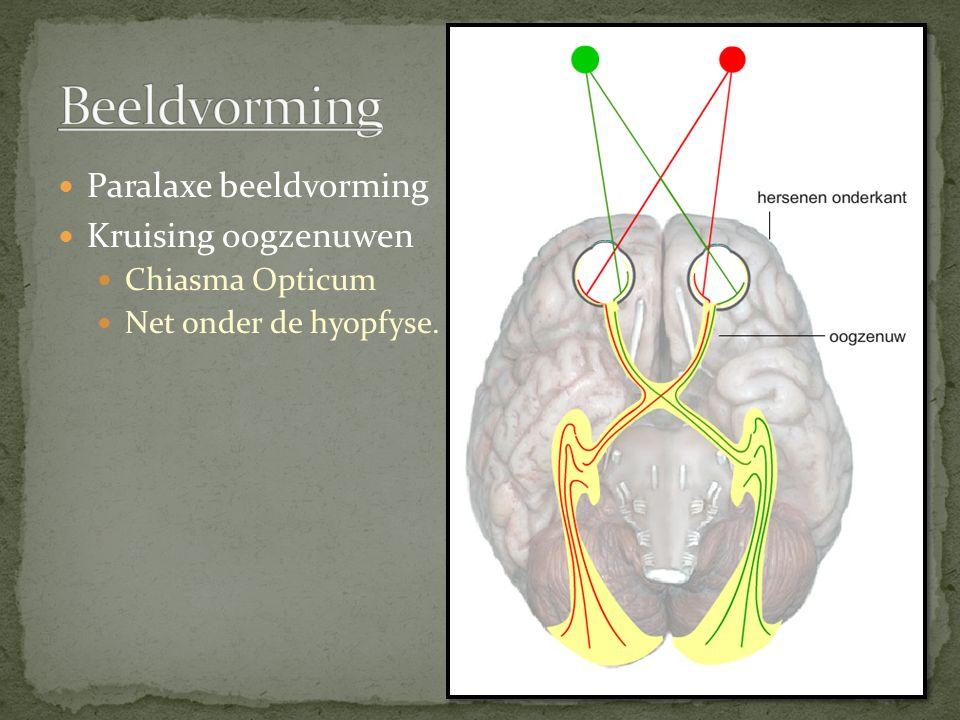 Beeldvorming Paralaxe beeldvorming Kruising oogzenuwen Chiasma Opticum