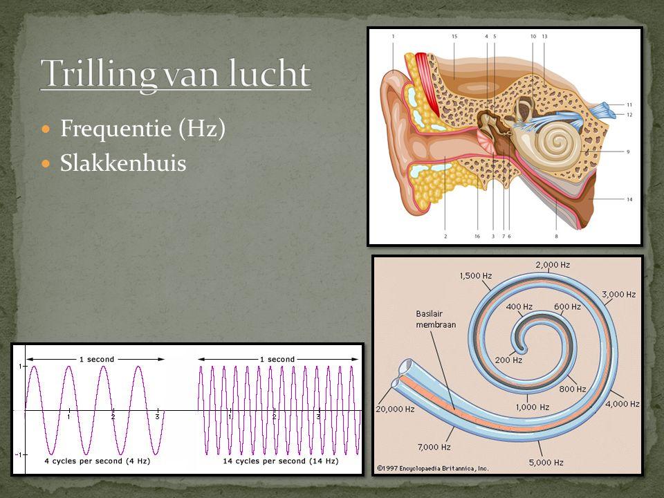 Trilling van lucht Frequentie (Hz) Slakkenhuis