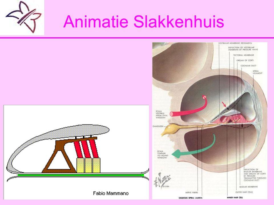 Animatie Slakkenhuis