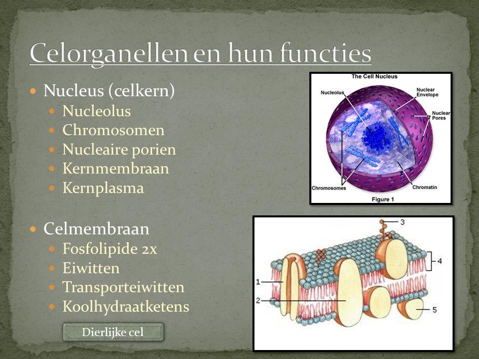 Celorganellen en hun functies