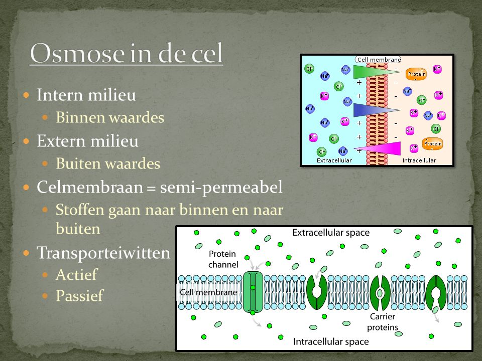 Osmose in de cel Intern milieu Extern milieu