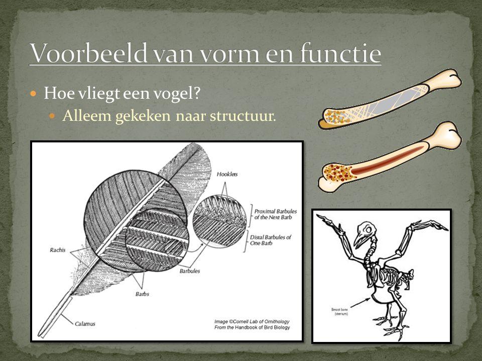 Voorbeeld van vorm en functie