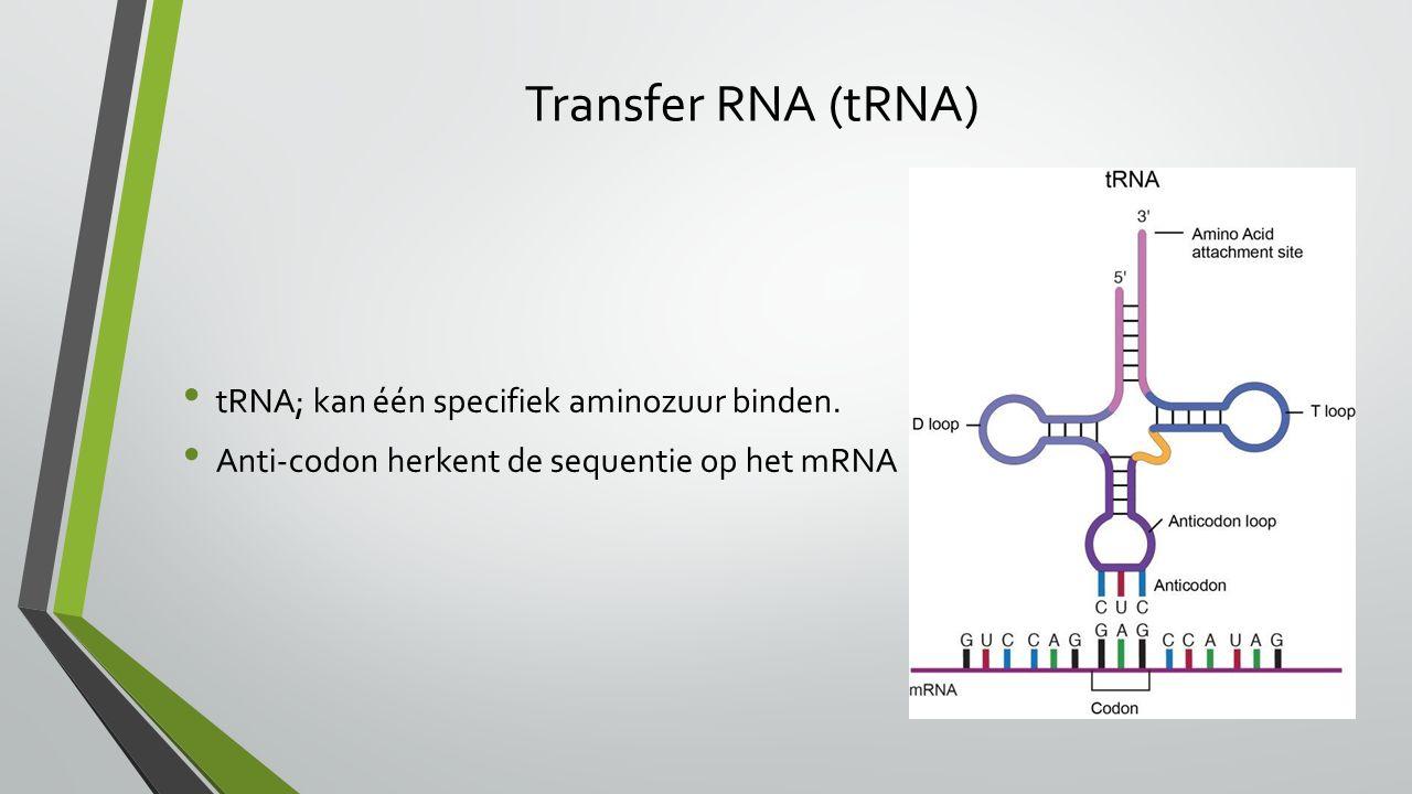Transfer RNA (tRNA) tRNA; kan één specifiek aminozuur binden.