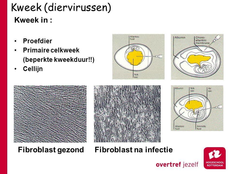 Kweek (diervirussen) Kweek in : Fibroblast gezond