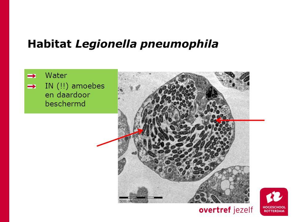 Habitat Legionella pneumophila