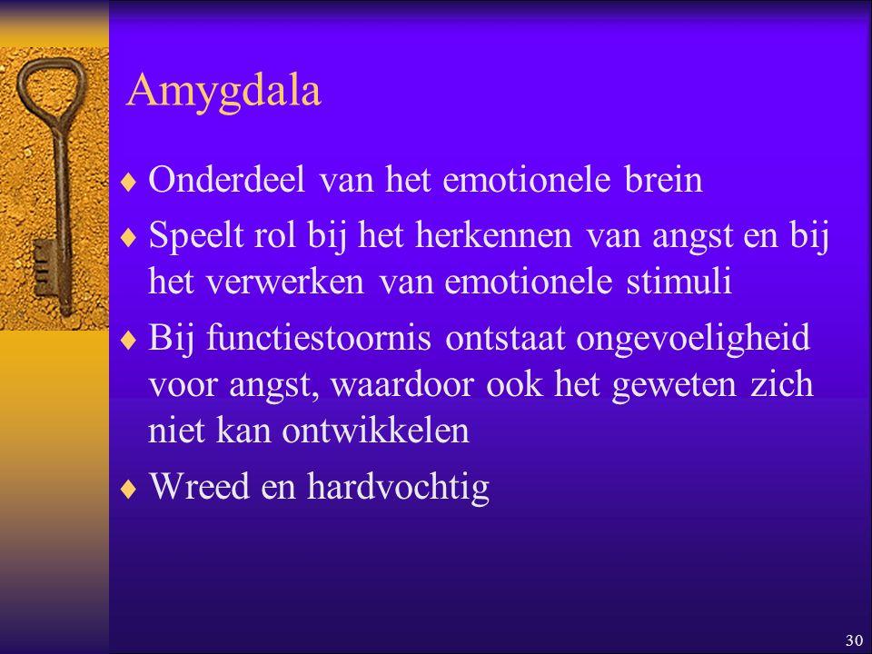 Amygdala Onderdeel van het emotionele brein