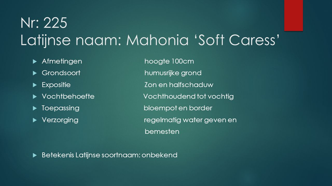 Nr: 225 Latijnse naam: Mahonia 'Soft Caress'