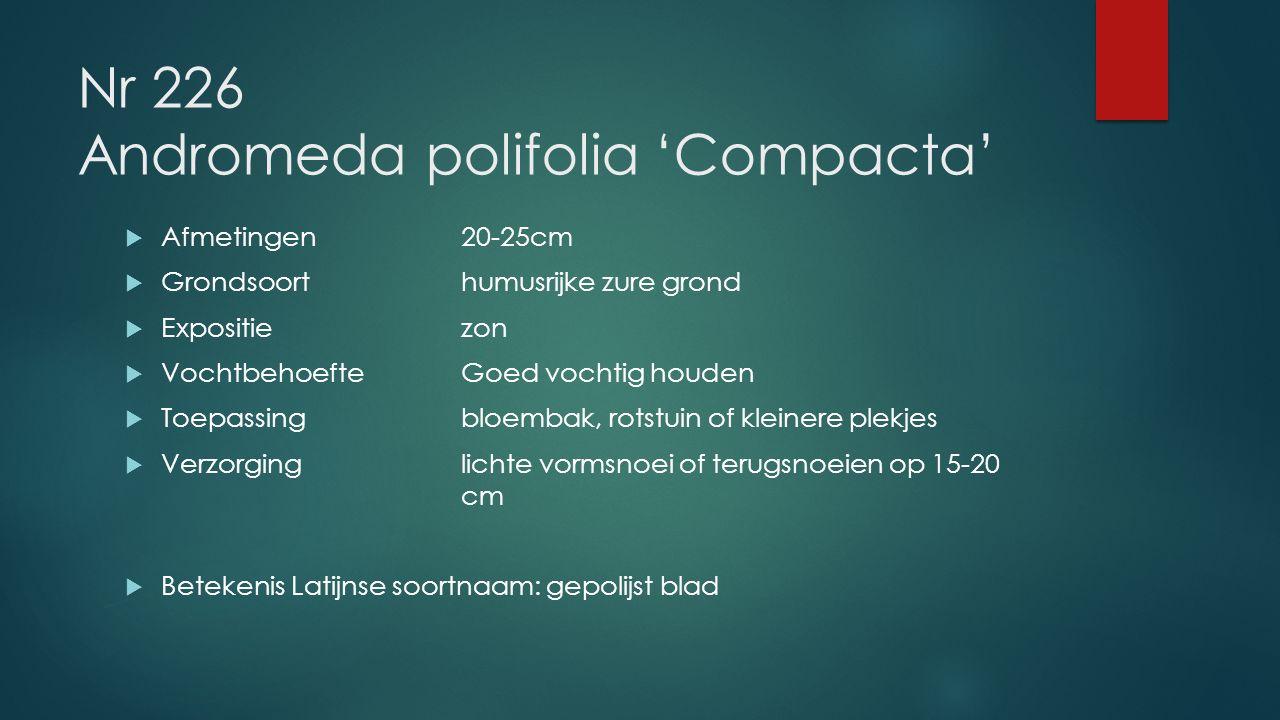 Nr 226 Andromeda polifolia 'Compacta'