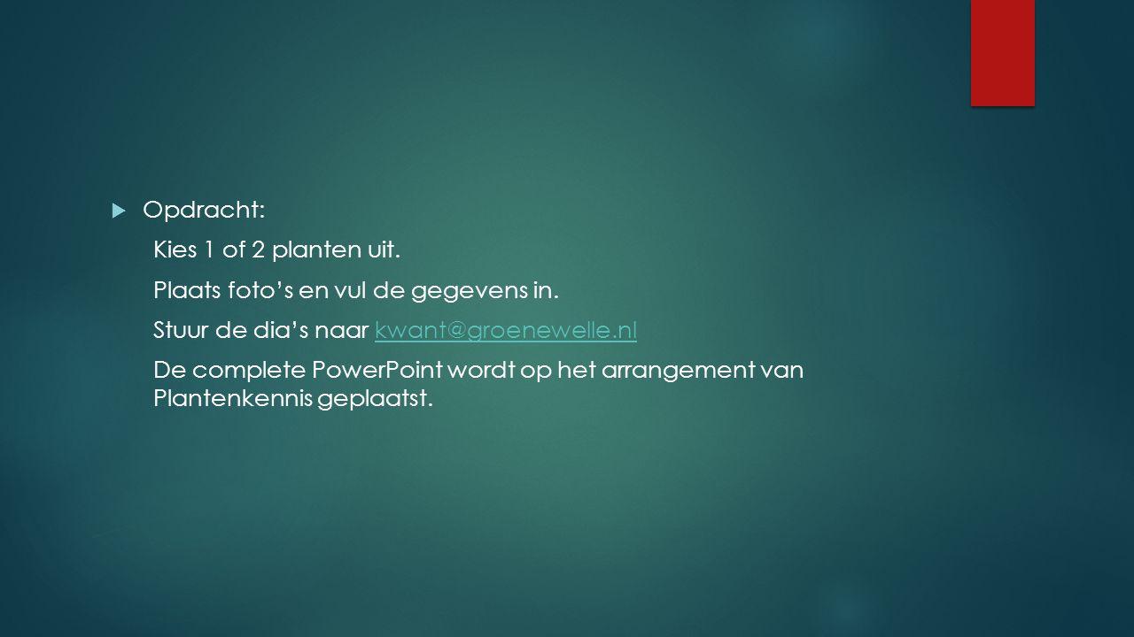 Opdracht: Kies 1 of 2 planten uit. Plaats foto's en vul de gegevens in. Stuur de dia's naar kwant@groenewelle.nl.