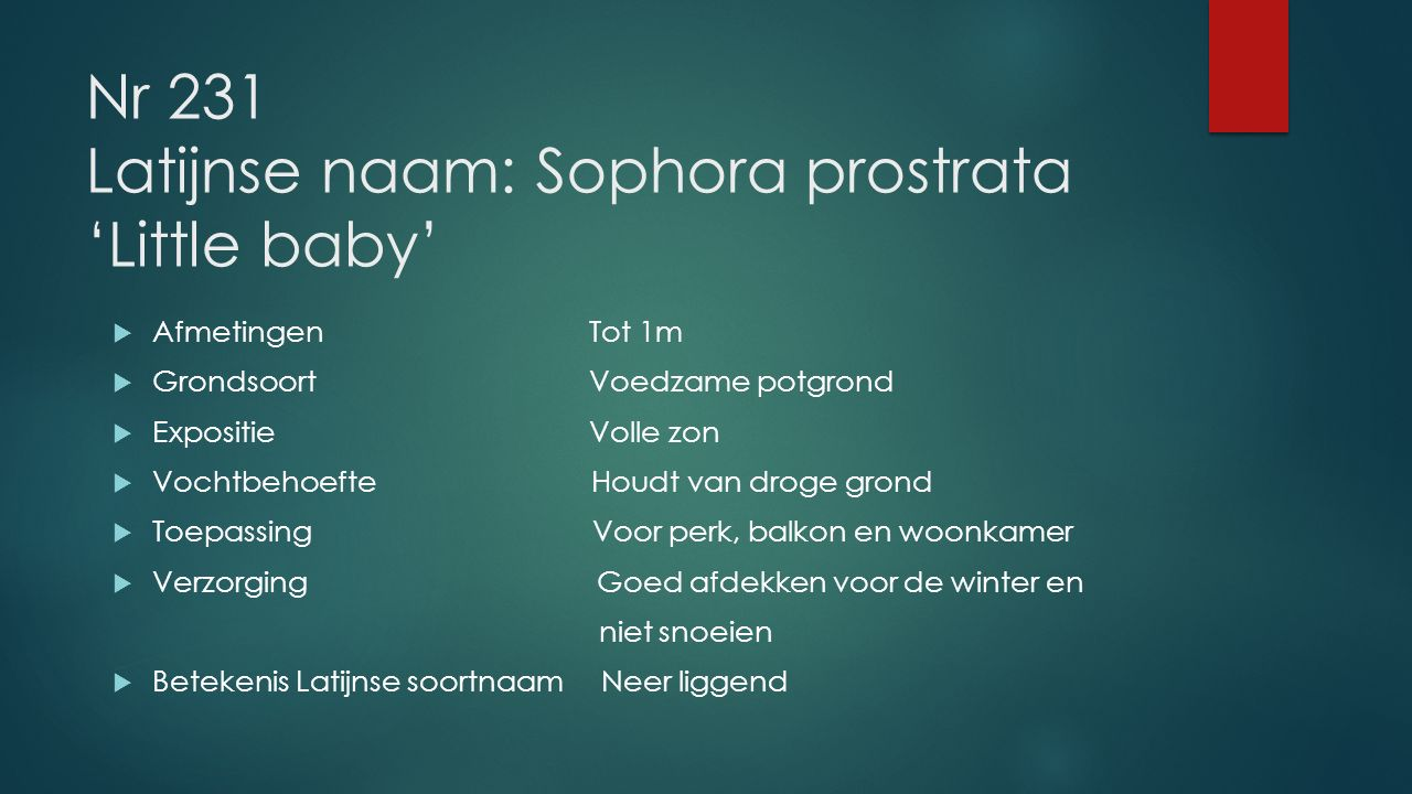 Nr 231 Latijnse naam: Sophora prostrata 'Little baby'