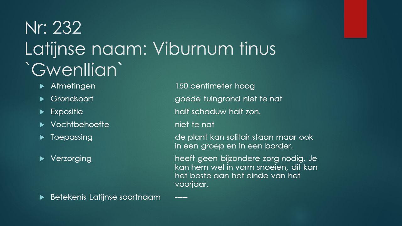 Nr: 232 Latijnse naam: Viburnum tinus `Gwenllian`