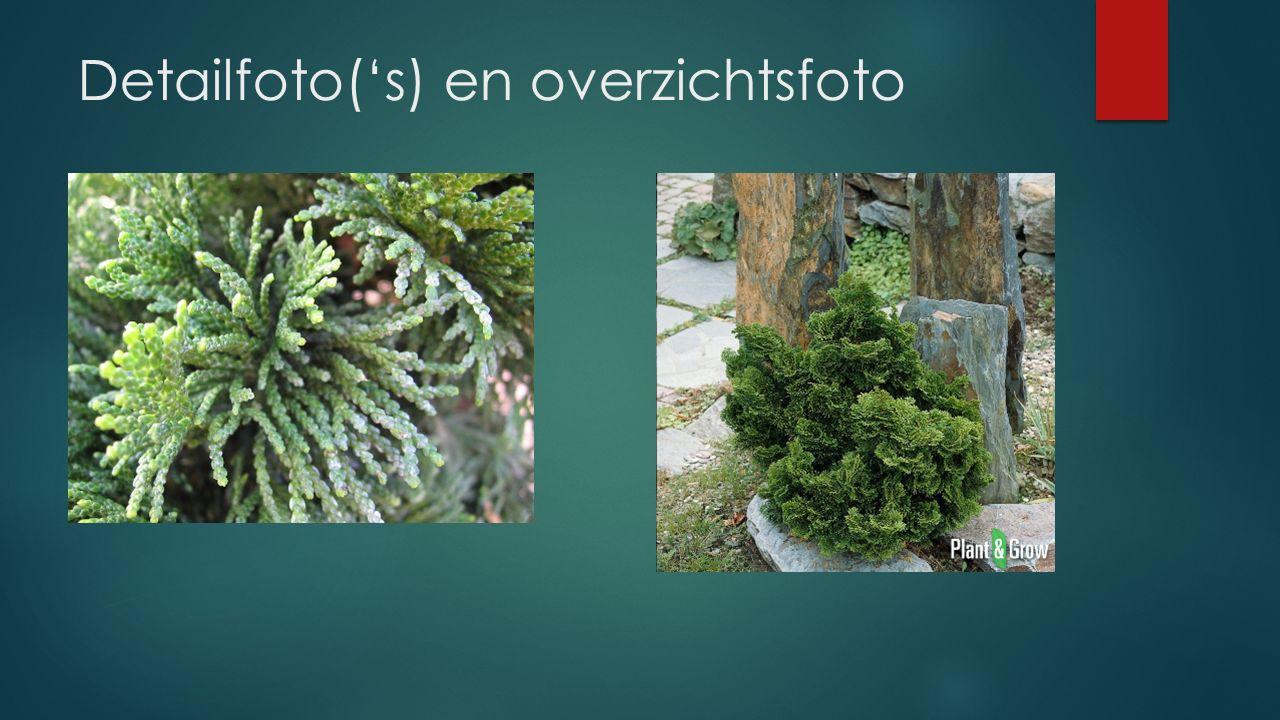 Detailfoto('s) en overzichtsfoto