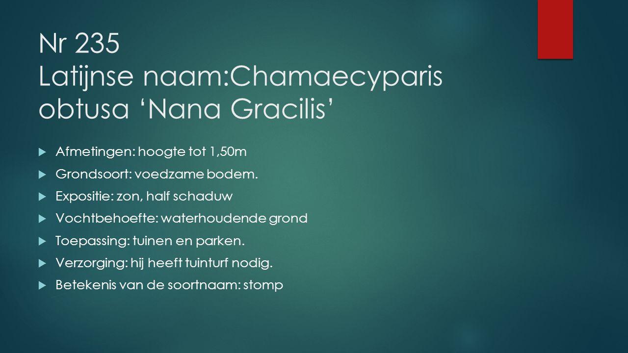 Nr 235 Latijnse naam:Chamaecyparis obtusa 'Nana Gracilis'