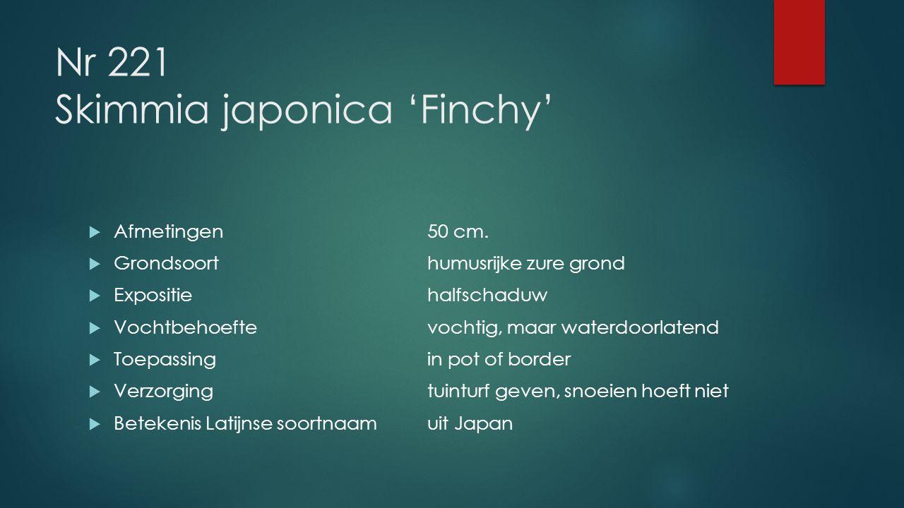 Nr 221 Skimmia japonica 'Finchy'