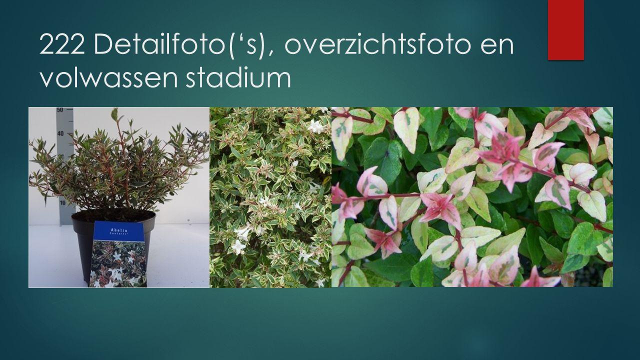 222 Detailfoto('s), overzichtsfoto en volwassen stadium